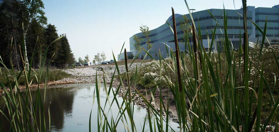 Corporate Services building behind wetland and grasses
