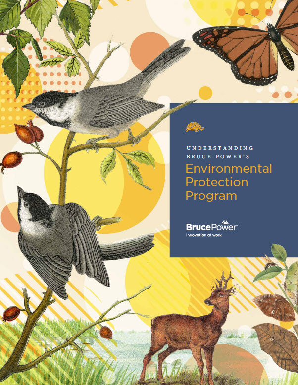 environmental protection program 2019